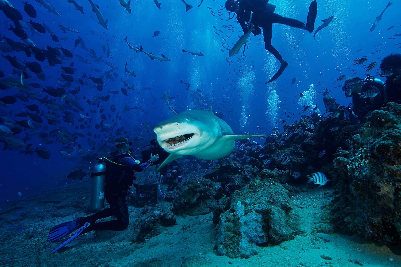 Dive Fiji Beqa Lagoon