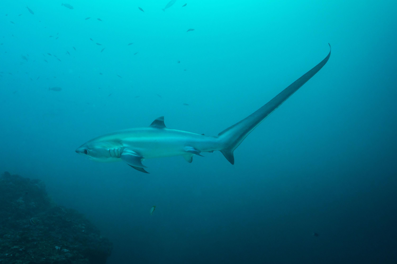 Dive Malapascu Philippines