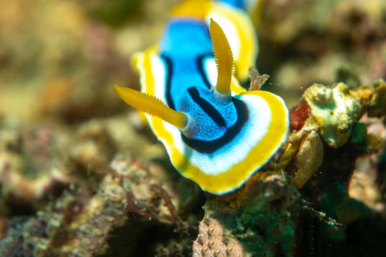 Dive Dumaguete Philippines