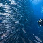 Dive Holiday at Cocos Island in Costa Rica